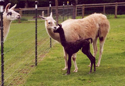 Grace Ann's baby meets Kiva.